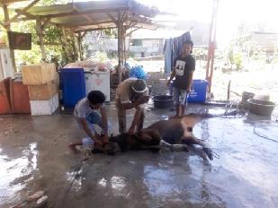 Pemotongan hewan qurban